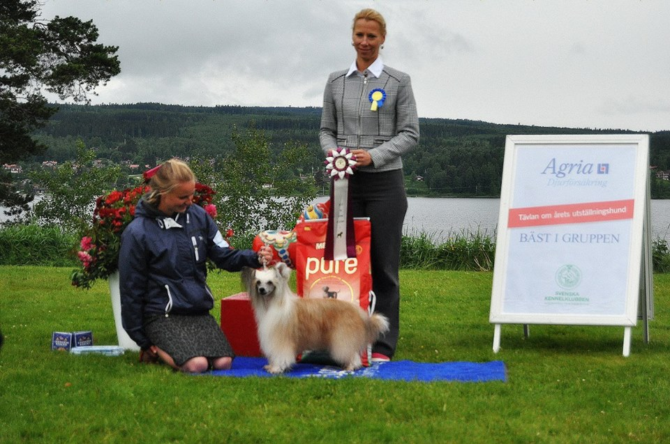 BEST IN SHOW 1 veteran Leksand-16