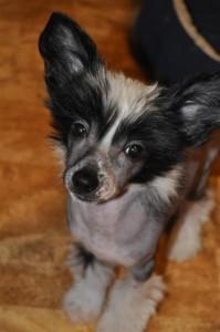 Britta (14) (Large)