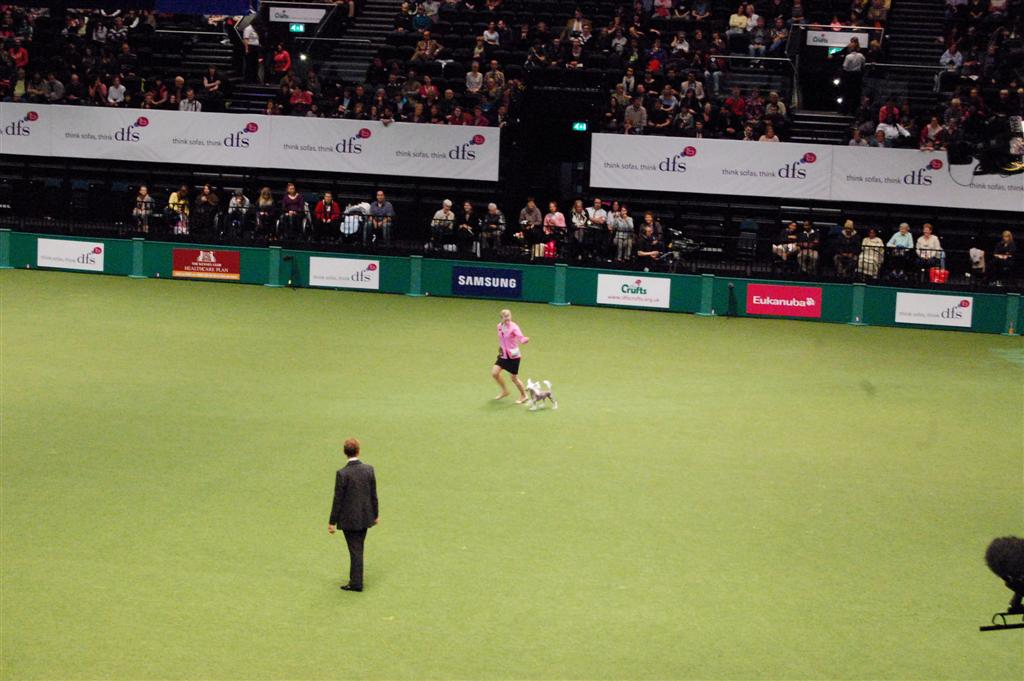 In the group at Crufts-10