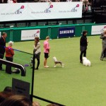 Group at Crufts