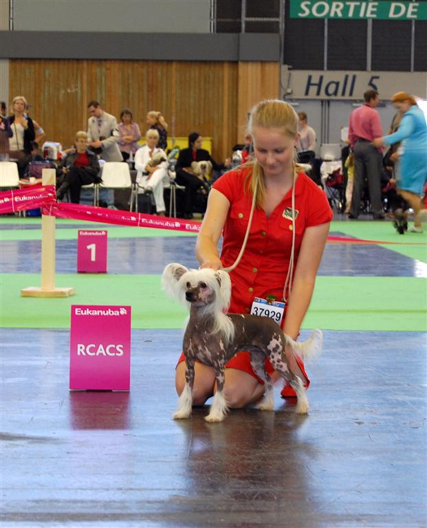 R CAC in Paris World dog show