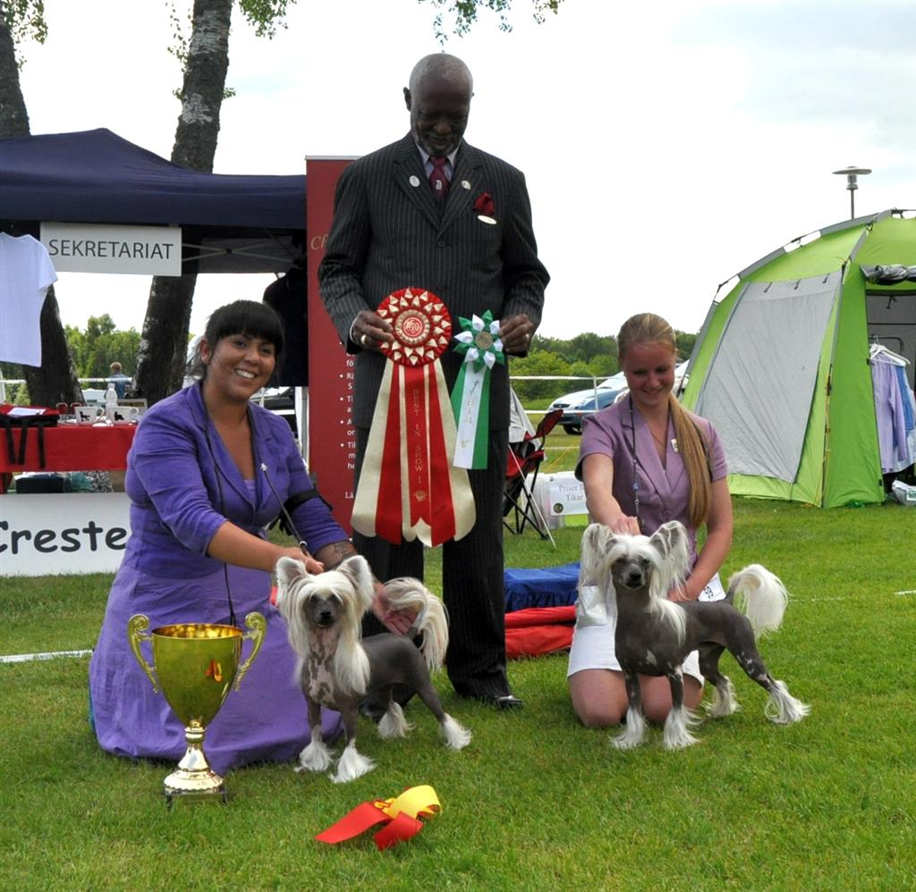 BOS at club show 8/6-13. 106 dogs entered